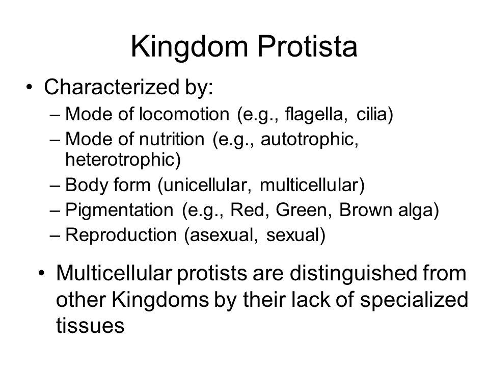 Kingdom Protista Characterized by: –Mode of locomotion (e.g., flagella, cilia) –Mode of nutrition (e.g., autotrophic, heterotrophic) –Body form (unice