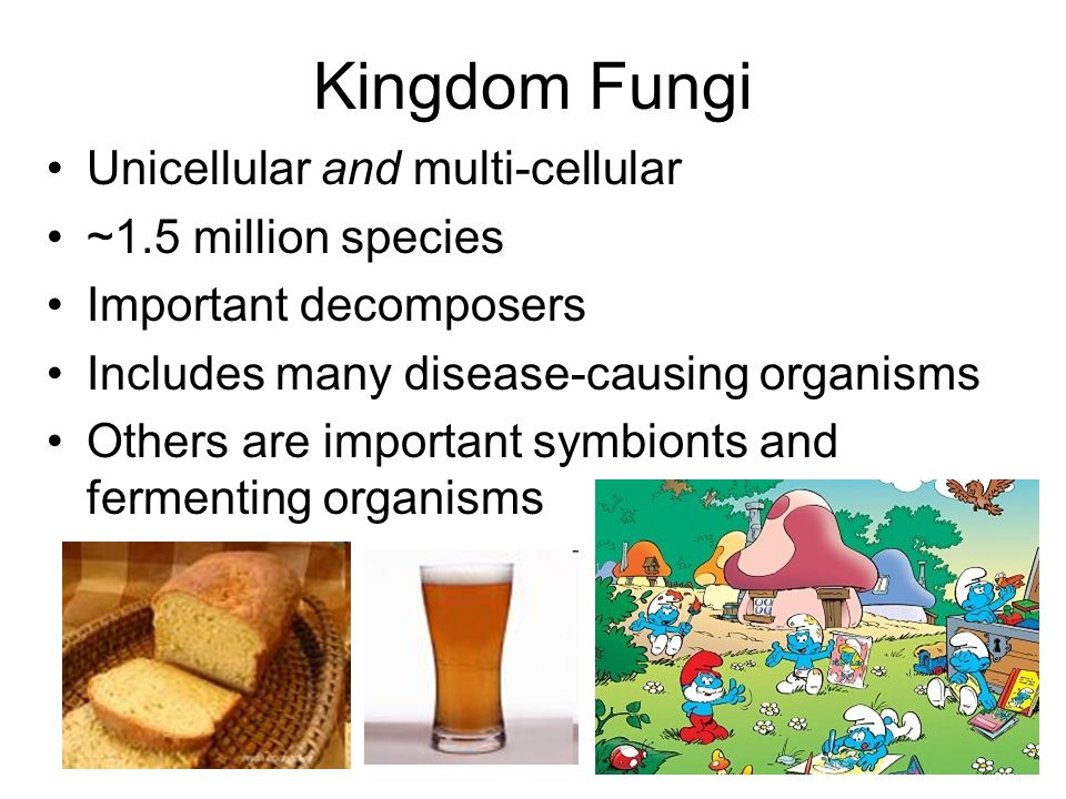 Unicellular and multi-cellular ~1.5 million species Important decomposers Includes many disease-causing organisms Others are important symbionts and f