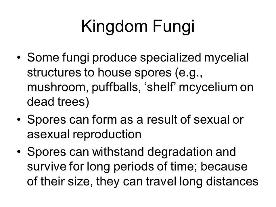 Kingdom Fungi Some fungi produce specialized mycelial structures to house spores (e.g., mushroom, puffballs, 'shelf' mcycelium on dead trees) Spores c