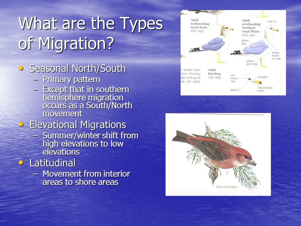 What are the Types of Migration? Seasonal North/South Seasonal North/South –Primary pattern –Except that in southern hemisphere migration occurs as a