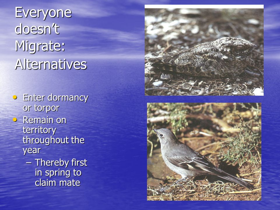 Everyone doesn't Migrate: Alternatives Enter dormancy or torpor Enter dormancy or torpor Remain on territory throughout the year Remain on territory throughout the year –Thereby first in spring to claim mate