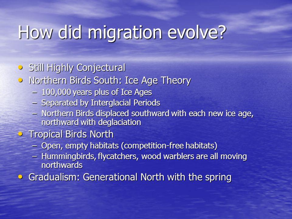 How did migration evolve? Still Highly Conjectural Still Highly Conjectural Northern Birds South: Ice Age Theory Northern Birds South: Ice Age Theory