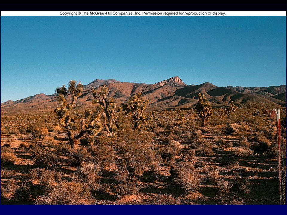 Grasslands Communities of grasses, seasonal herbaceous flowering plants, and open savannas.