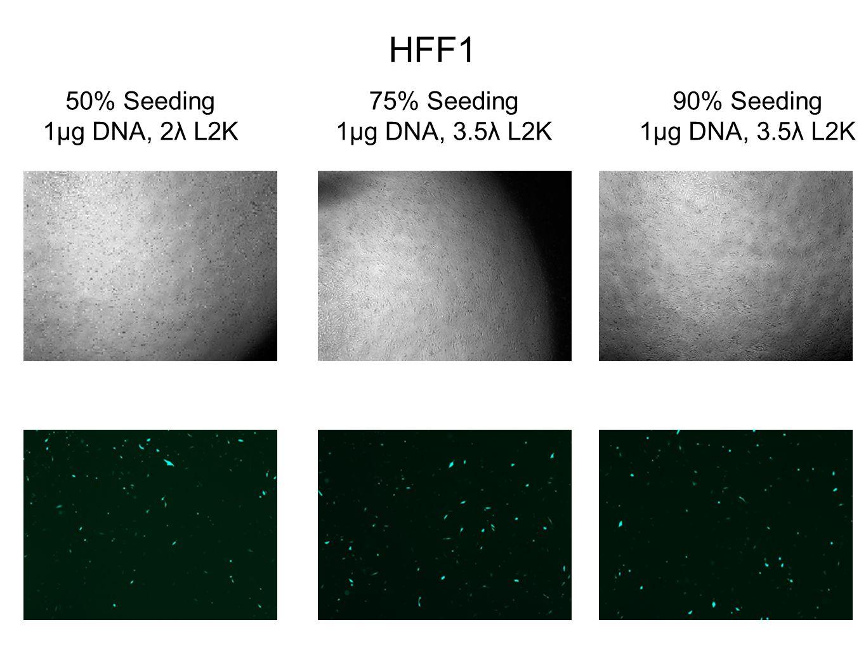 HFF1 50% Seeding 1µg DNA, 2λ L2K 75% Seeding 1µg DNA, 3.5λ L2K 90% Seeding 1µg DNA, 3.5λ L2K