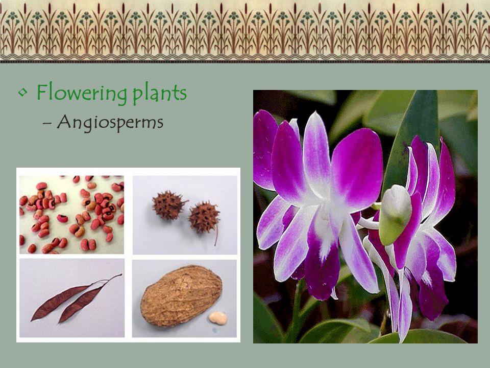 Flowering plants –Angiosperms