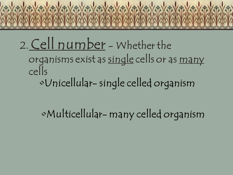 KingdomCell TypeCell #Feeding Type ArchaebacteriaProkaryoteUnicellularAutotroph EubacteriaProkaryoteUnicellularBoth ProtistaEukaryoteMost Unicellular Both FungiEukaryotebothHeterotroph PlantaeEukaryoteMulticellularAutotroph AnimaliaEukaryoteMulticellularHeterotroph Location Harsh areas Everywhere Ponds / Lakes Wet areas dead stuff Forests, deserts, water Anywhere they can get food