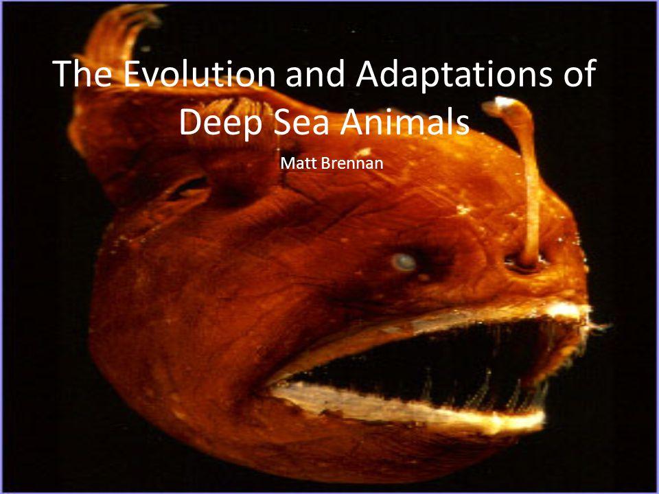 The Evolution and Adaptations of Deep Sea Animals Matt Brennan