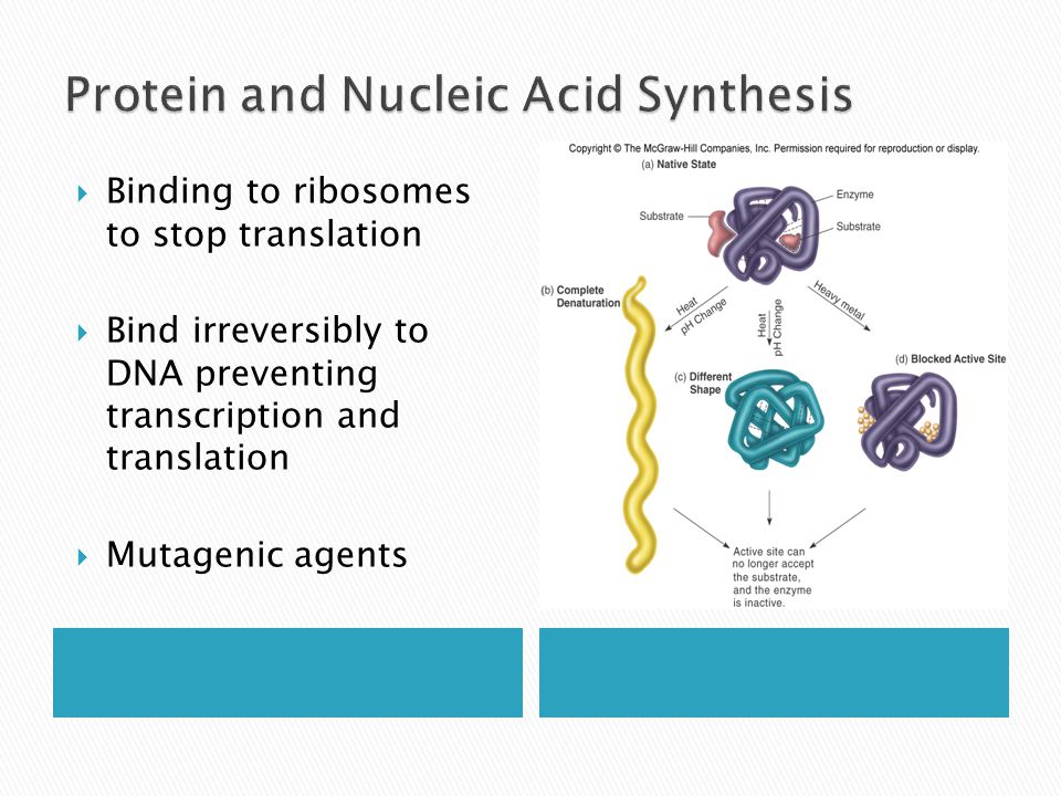  Binding to ribosomes to stop translation  Bind irreversibly to DNA preventing transcription and translation  Mutagenic agents
