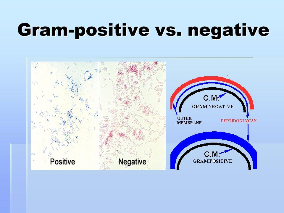 Gram-positive vs. negative