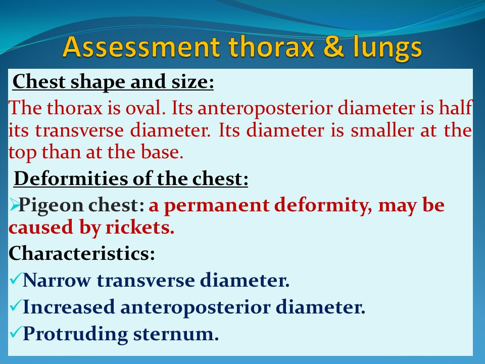 Chest shape and size: The thorax is oval. Its anteroposterior diameter is half its transverse diameter. Its diameter is smaller at the top than at the