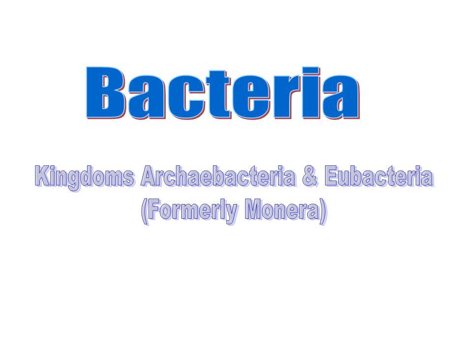 Spirillium Spiral or squiggle shaped bacteria Vibrio Spirillum Spirochete