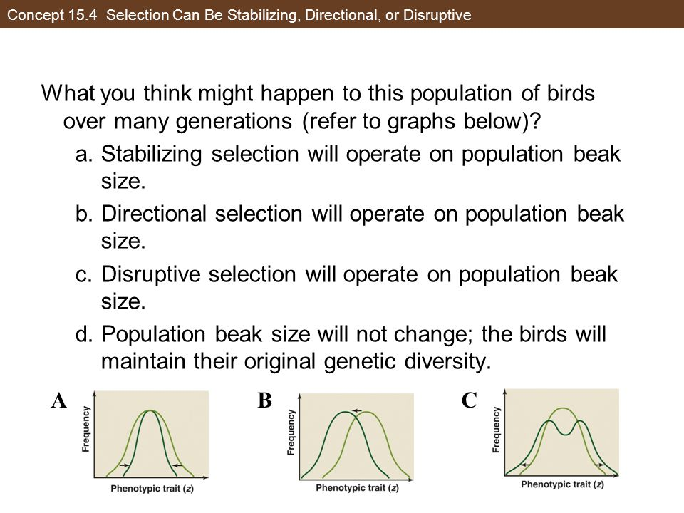 Concept 15.4 Selection Can Be Stabilizing, Directional, or Disruptive What you think might happen to this population of birds over many generations (r