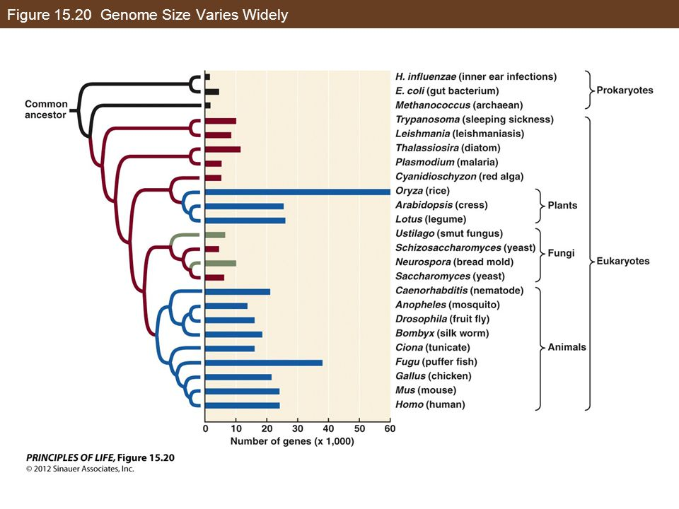 Figure 15.20 Genome Size Varies Widely