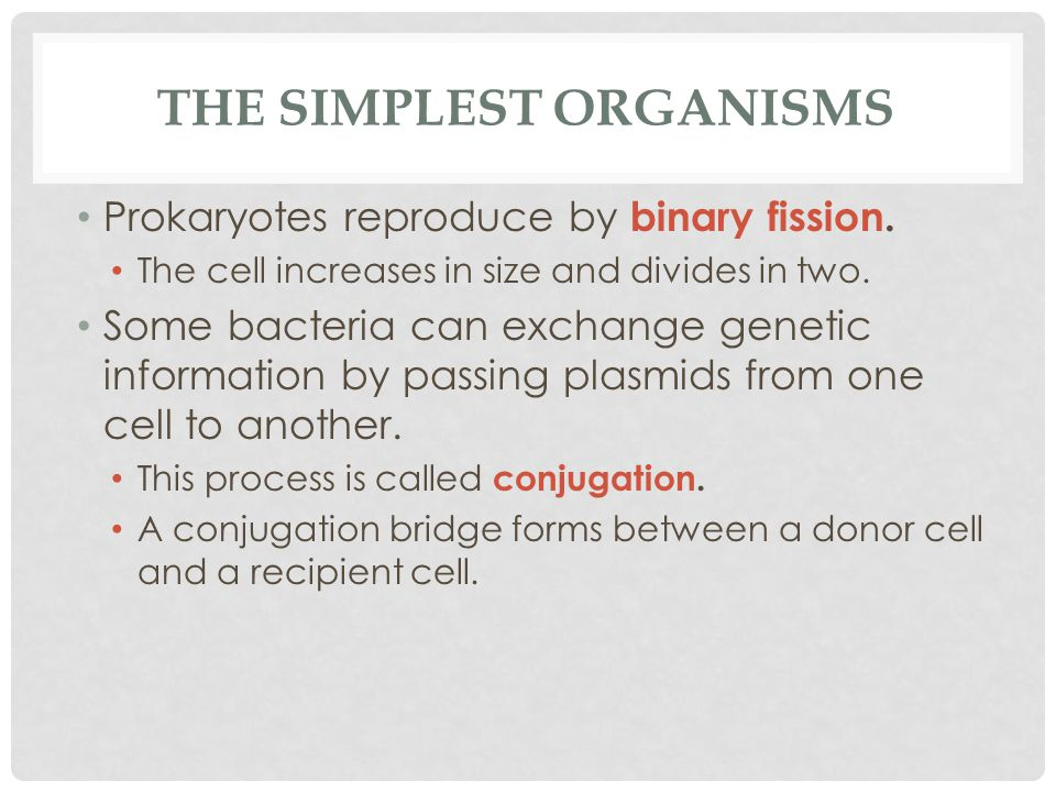 THE SIMPLEST ORGANISMS Prokaryotes reproduce by binary fission. The cell increases in size and divides in two. Some bacteria can exchange genetic info