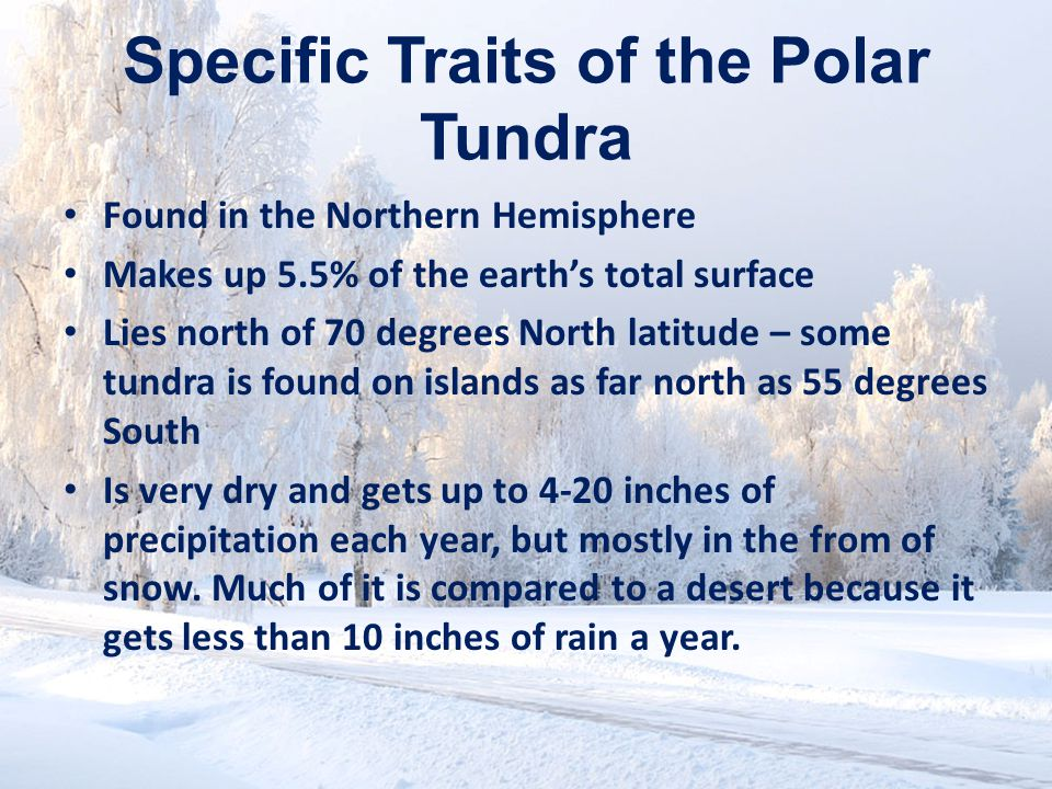 Specific Traits of the Alpine Tundra Absolutely no trees can grow here because of the elevation being so high.