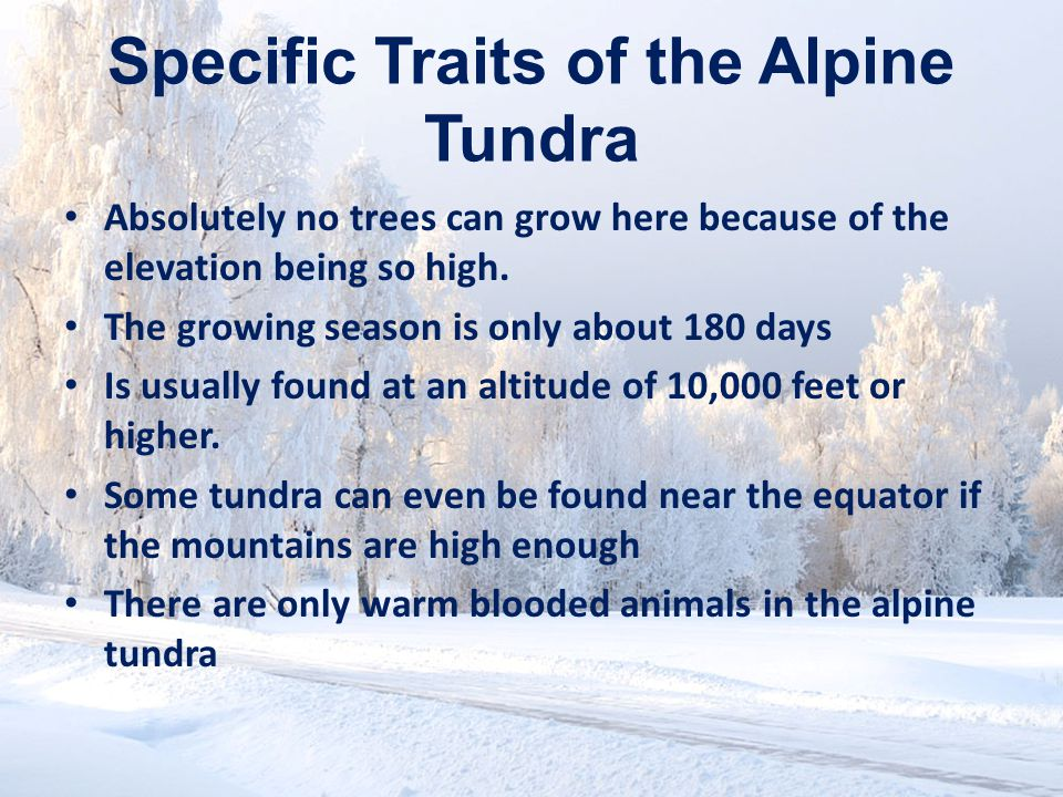Tundra Climate The Tundra has freezing winter temperatures and cool, short summers.