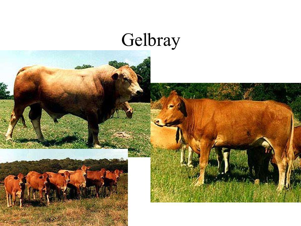 Gelbray