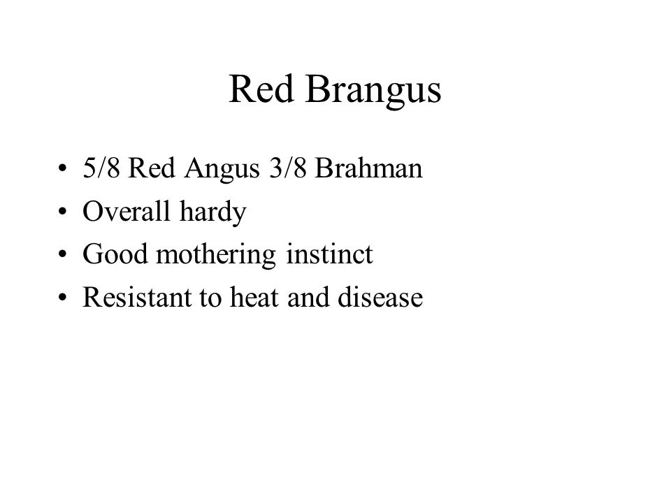 Red Brangus 5/8 Red Angus 3/8 Brahman Overall hardy Good mothering instinct Resistant to heat and disease