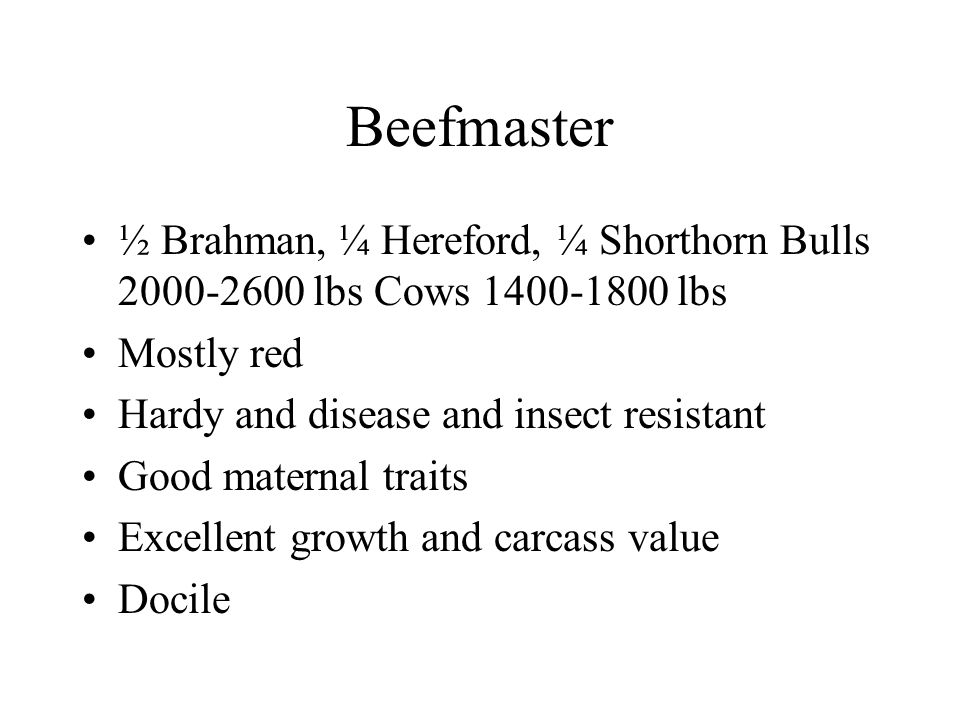 Beefmaster ½ Brahman, ¼ Hereford, ¼ Shorthorn Bulls 2000-2600 lbs Cows 1400-1800 lbs Mostly red Hardy and disease and insect resistant Good maternal traits Excellent growth and carcass value Docile
