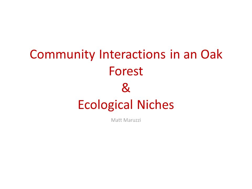 Community Interactions in an Oak Forest & Ecological Niches Matt Maruzzi