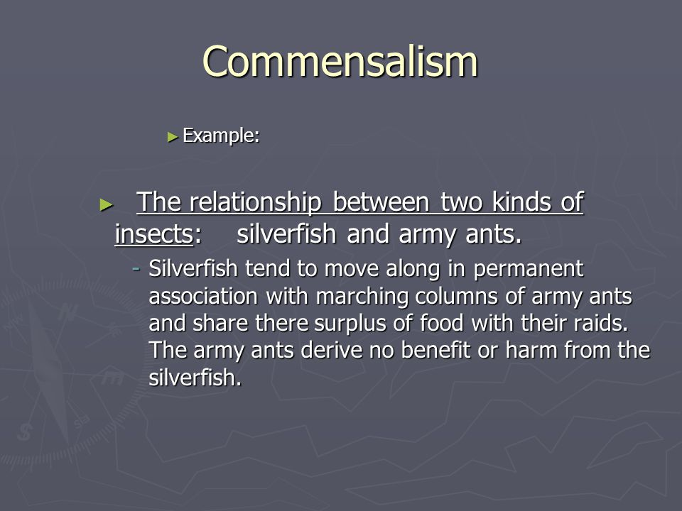 Commensalism ► Example: ► The relationship between two kinds of insects: silverfish and army ants.