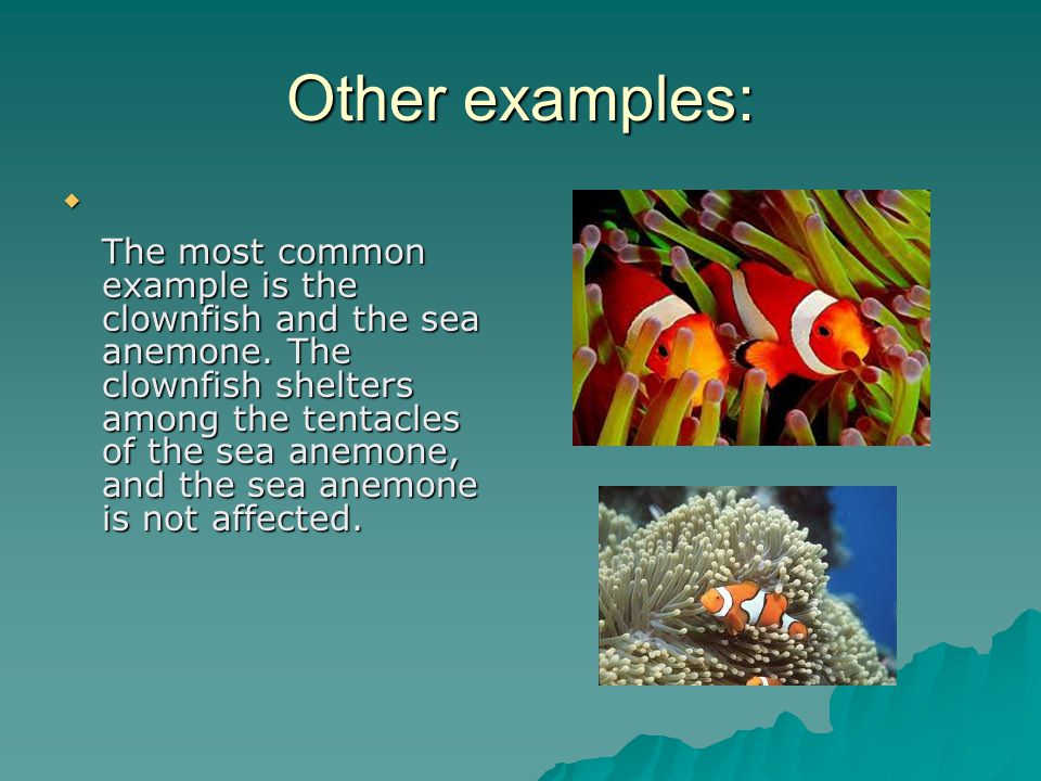 Other examples:  The most common example is the clownfish and the sea anemone.