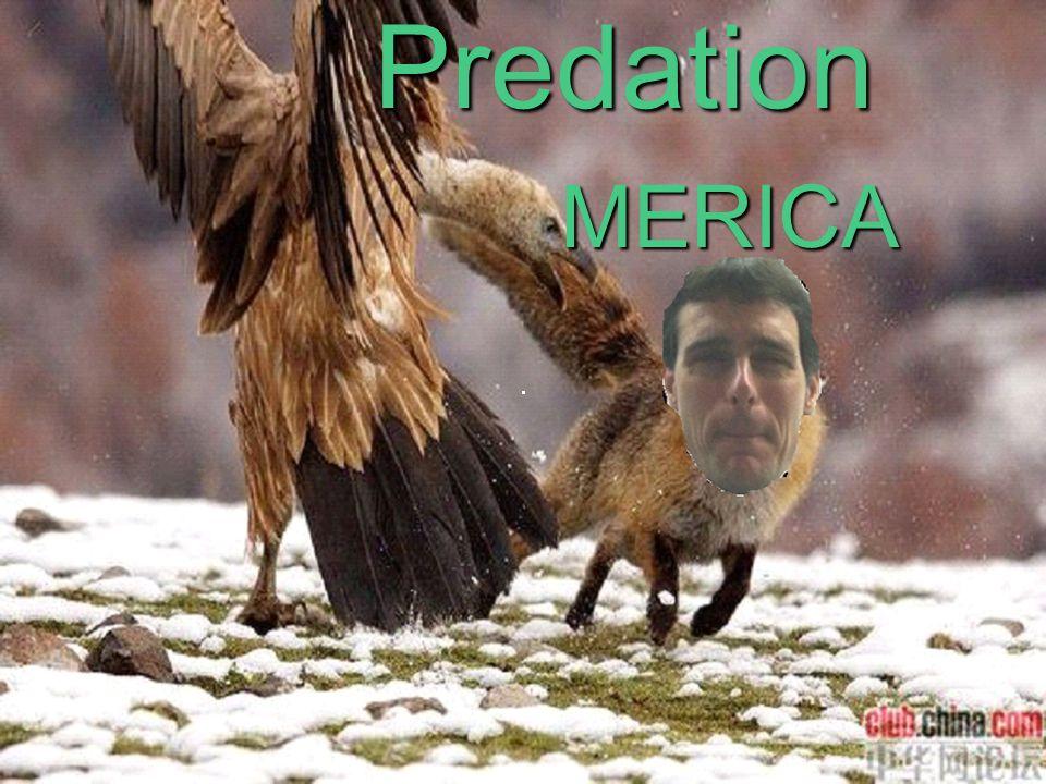 Predation MERICA