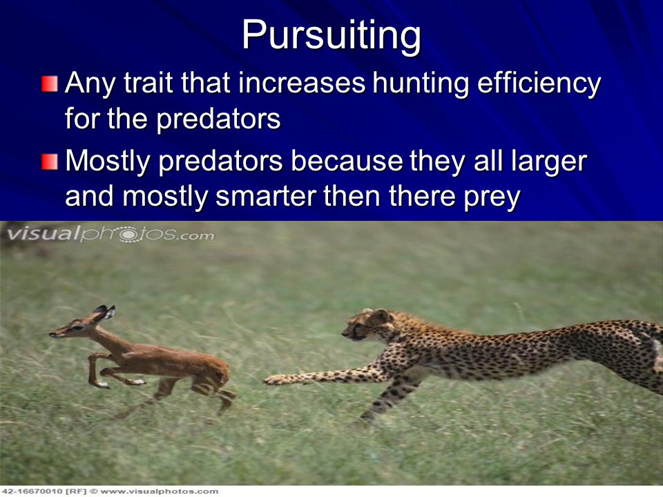 Pursuiting Any trait that increases hunting efficiency for the predators Mostly predators because they all larger and mostly smarter then there prey