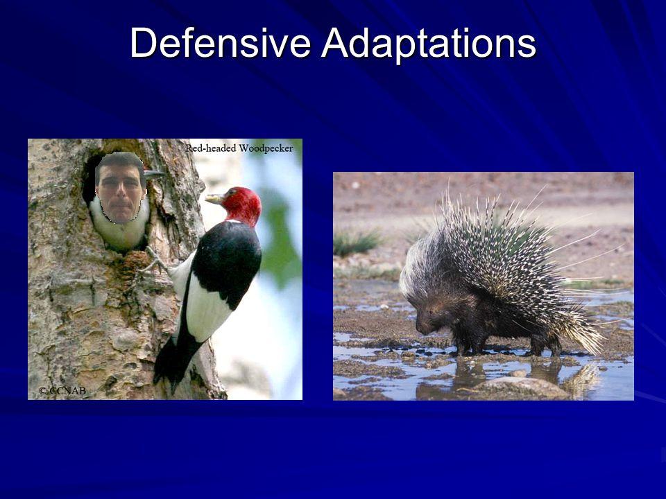Defensive Adaptations