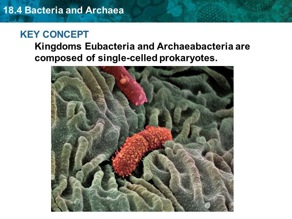 18.4 Bacteria and Archaea KEY CONCEPT Kingdoms Eubacteria and Archaeabacteria are composed of single-celled prokaryotes.