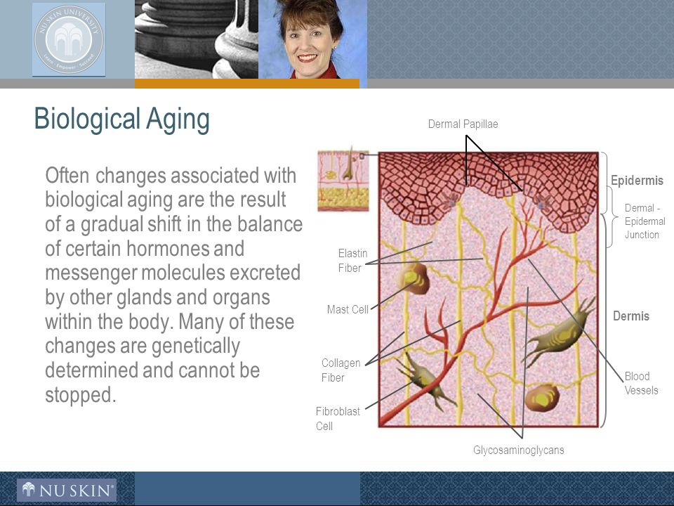 Biological Aging Often changes associated with biological aging are the result of a gradual shift in the balance of certain hormones and messenger molecules excreted by other glands and organs within the body.