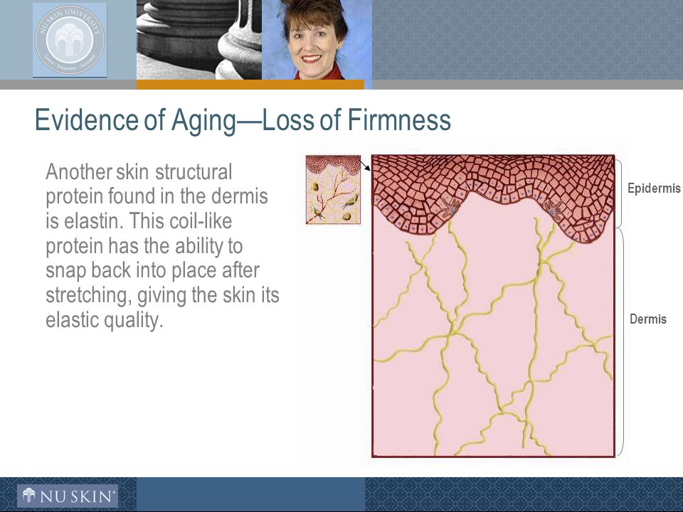 Evidence of Aging—Loss of Firmness Another skin structural protein found in the dermis is elastin.