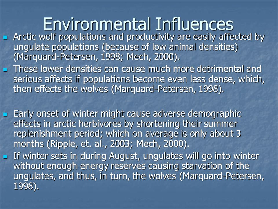 Environmental Influences Arctic wolf populations and productivity are easily affected by ungulate populations (because of low animal densities) (Marquard-Petersen, 1998; Mech, 2000).