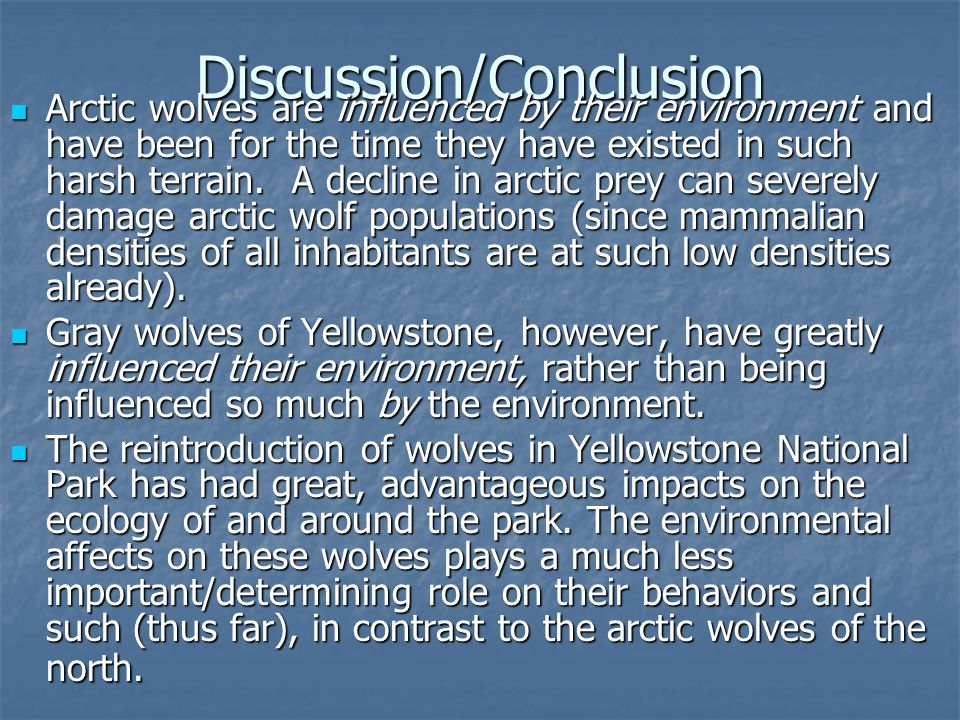 Discussion/Conclusion Arctic wolves are influenced by their environment and have been for the time they have existed in such harsh terrain.