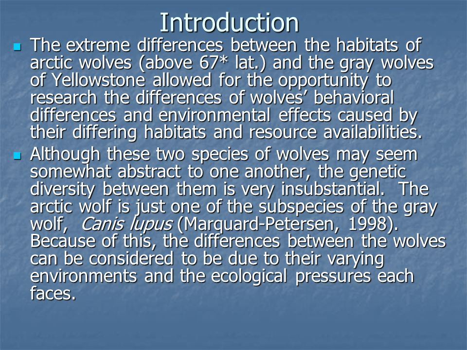 Introduction The extreme differences between the habitats of arctic wolves (above 67* lat.) and the gray wolves of Yellowstone allowed for the opportunity to research the differences of wolves' behavioral differences and environmental effects caused by their differing habitats and resource availabilities.