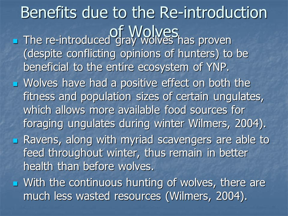 Yellowstone Conclusions Thus, it appears to be obvious that wolves prove to be extremely beneficial to environments populated with unchecked ungulates especially during winter months.