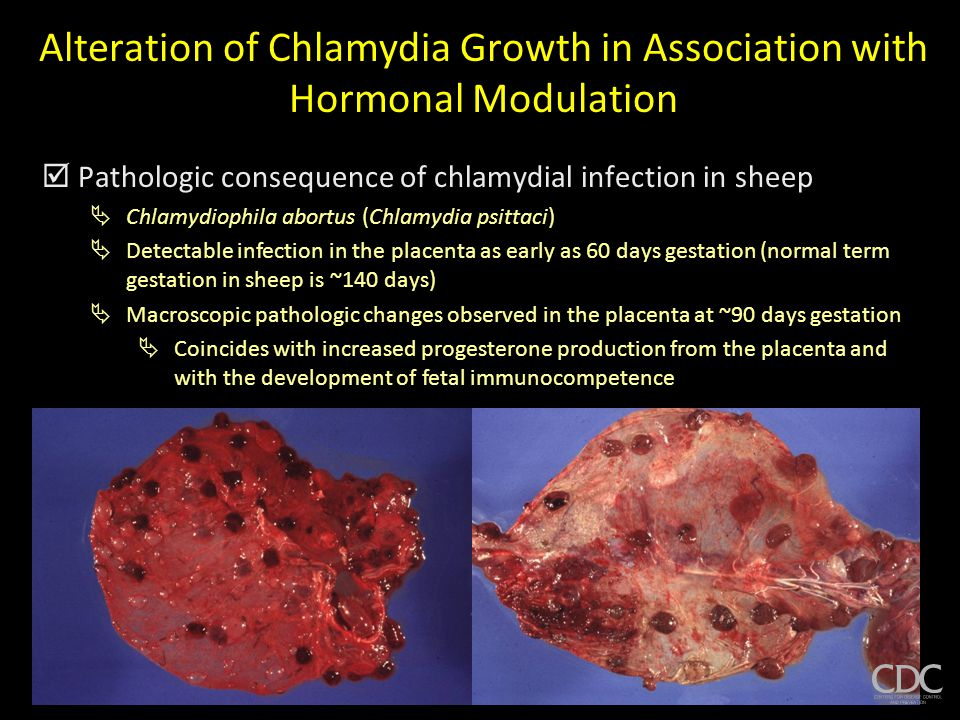 Alteration of Chlamydia Growth in Association with Hormonal Modulation  Pathologic consequence of chlamydial infection in sheep  Chlamydiophila abortus (Chlamydia psittaci)  Detectable infection in the placenta as early as 60 days gestation (normal term gestation in sheep is ~140 days)  Macroscopic pathologic changes observed in the placenta at ~90 days gestation  Coincides with increased progesterone production from the placenta and with the development of fetal immunocompetence