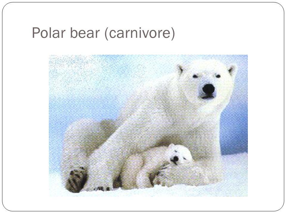 Arcticwolf (Carnivore)