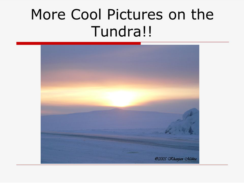 More Cool Pictures on the Tundra!!
