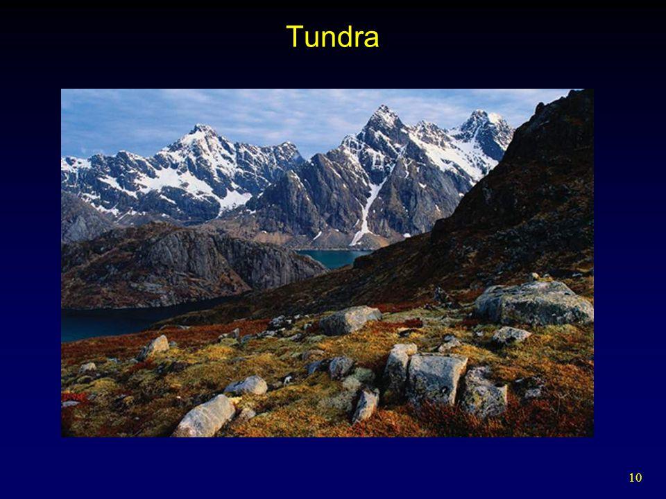 10 Tundra