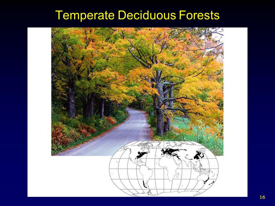 16 Temperate Deciduous Forests
