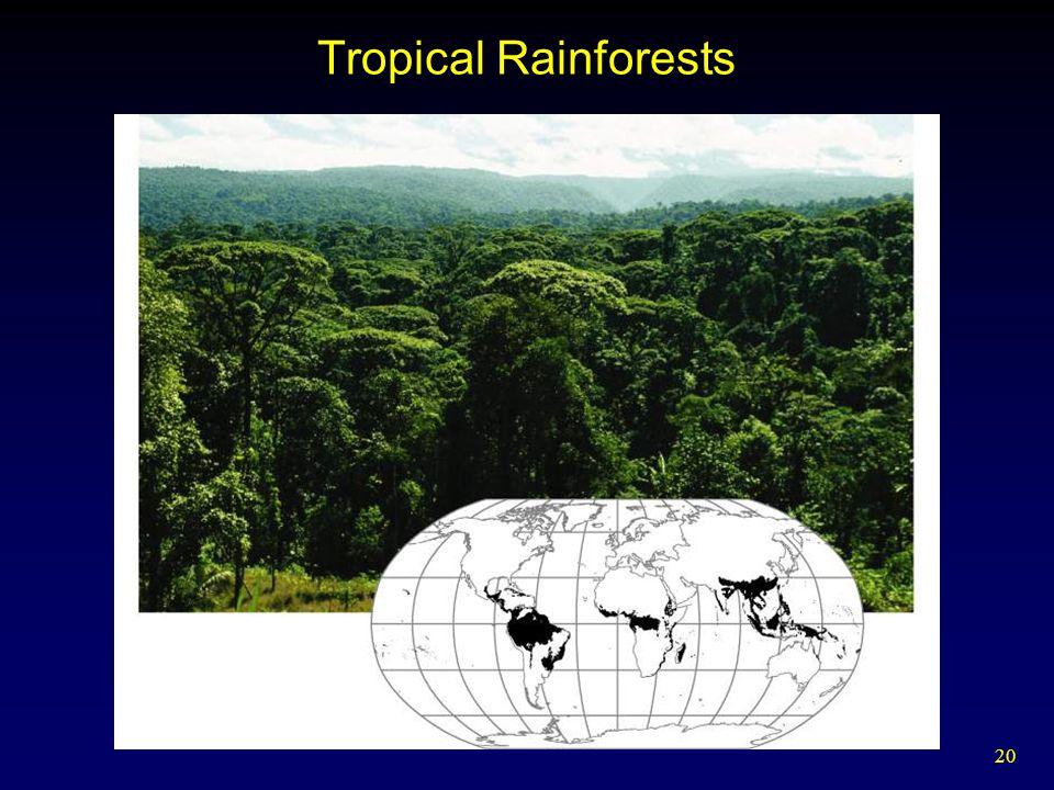 20 Tropical Rainforests