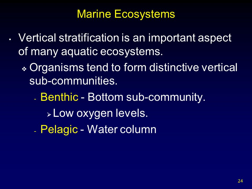 24 Marine Ecosystems Vertical stratification is an important aspect of many aquatic ecosystems.  Organisms tend to form distinctive vertical sub-comm