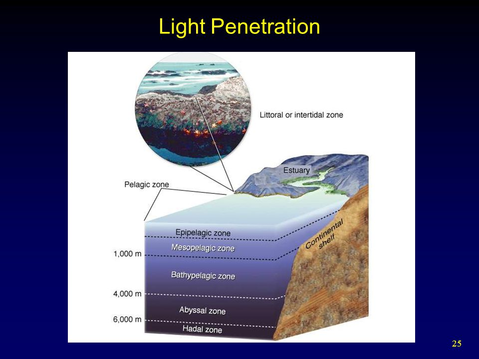 25 Light Penetration