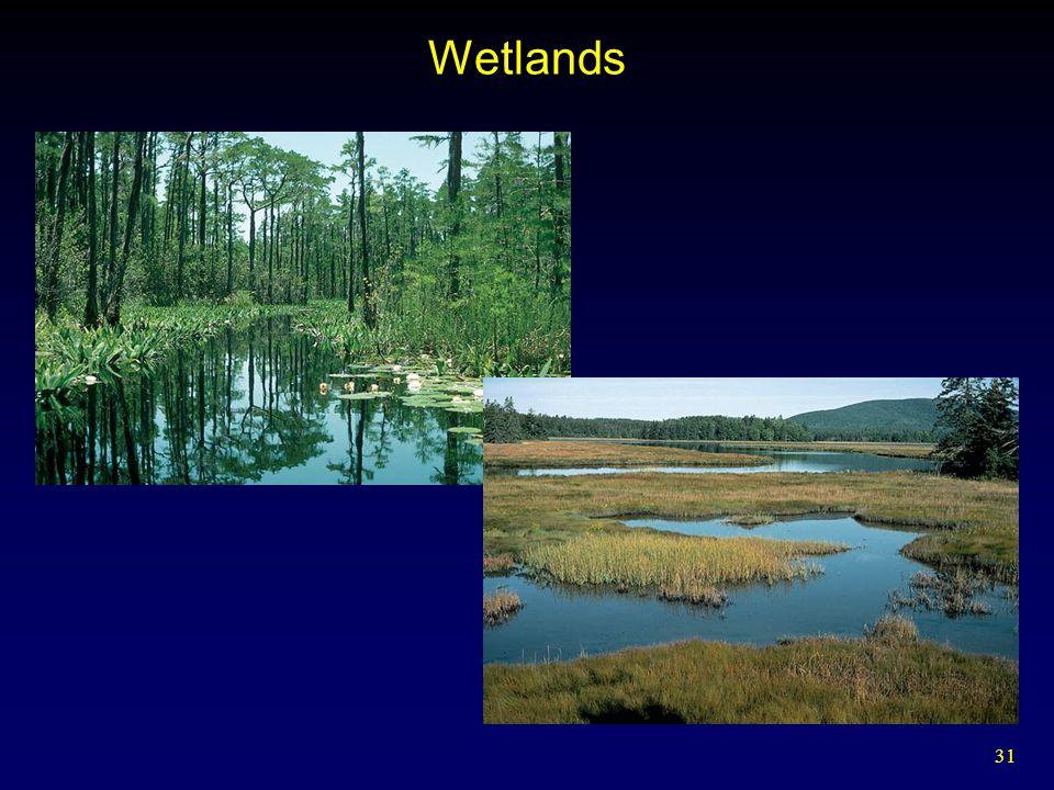 31 Wetlands