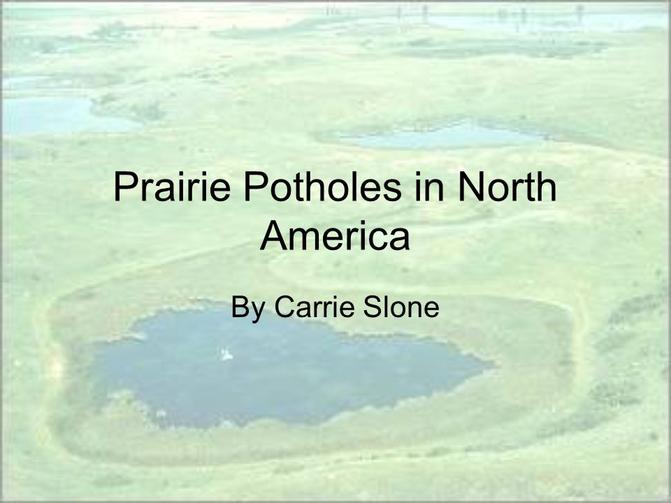 Prairie Potholes in North America By Carrie Slone
