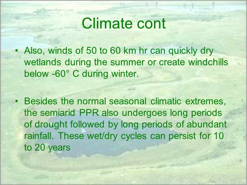 Climate cont Also, winds of 50 to 60 km hr can quickly dry wetlands during the summer or create windchills below -60° C during winter.