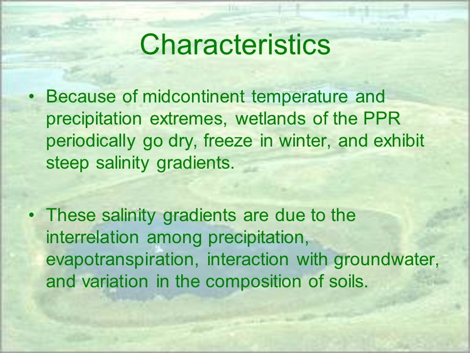 Characteristics Because of midcontinent temperature and precipitation extremes, wetlands of the PPR periodically go dry, freeze in winter, and exhibit steep salinity gradients.