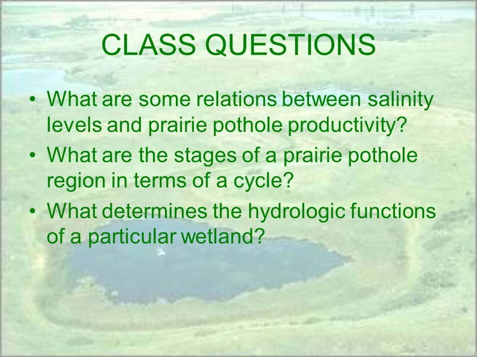 CLASS QUESTIONS What are some relations between salinity levels and prairie pothole productivity.