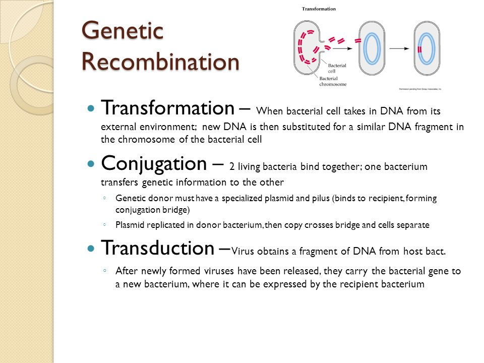Genetic Recombination Transformation – When bacterial cell takes in DNA from its external environment; new DNA is then substituted for a similar DNA f